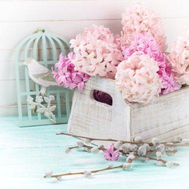 Fresh flowers hyacinths in box