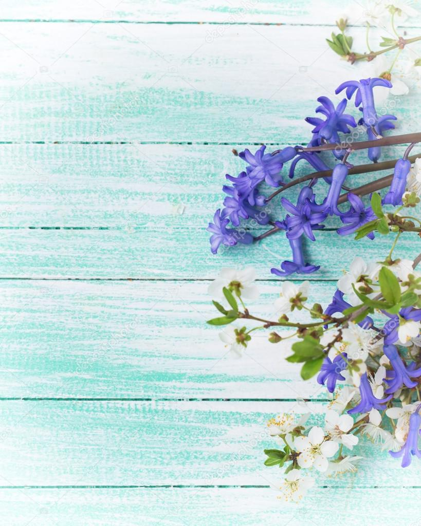 Flowering tree branches and blue flowers stock photo daffodil background with white spring flowering branches of trees and blue flowers on turquoise painted wooden planks selective focus place for text izmirmasajfo