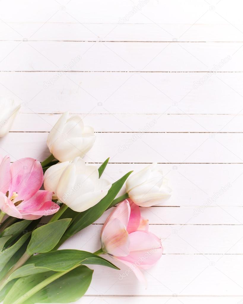Fresh Spring White And Pink Tulips On Painted Wooden Background Selective Focus Place For Text Vertical Image Photo By Daffodil