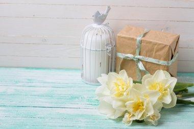 fresh daffodil flowers and gift
