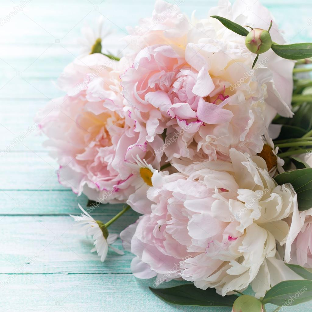 White Peonies Flowers Stock Photo Daffodil 85192066