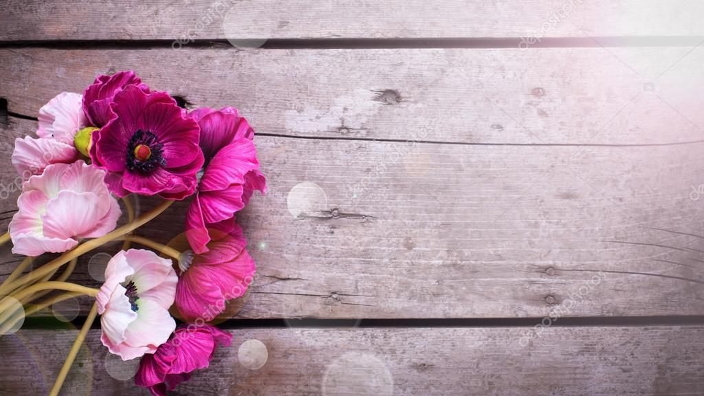 Fondos De Pantalla Rosa Rosa Flores Fondo De Madera: Rosa Flores Sobre Fondo De Madera