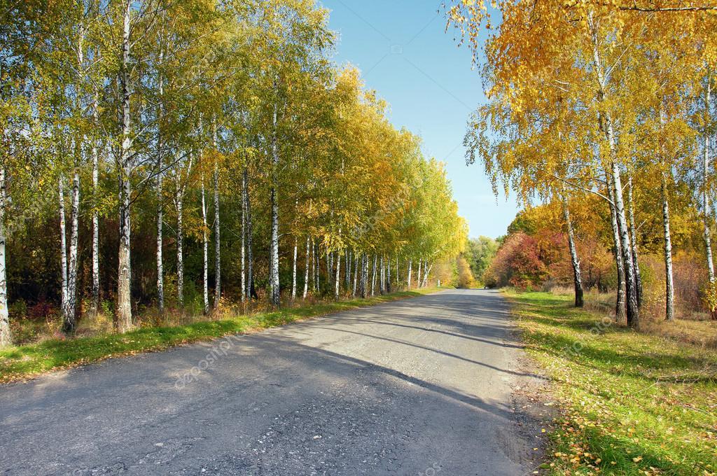 Autumn landscape in the park area.
