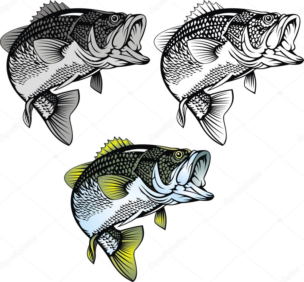 Bass Fish Cliparts - Largemouth Bass Clipart - Free Transparent PNG Clipart  Images Download