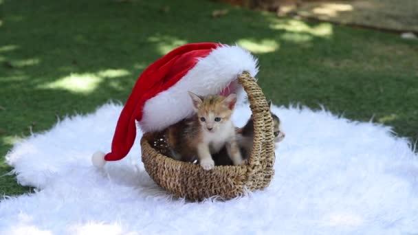 niedliche flauschige Kätzchen sitzen in einem schönen Weihnachtskorb und schauen uns an