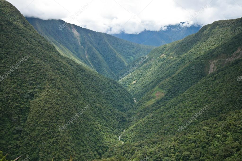 Rainforest in Bolivian Andes