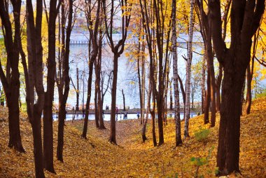 Bright colorful trees and leaves in Gorky Park in Moscow