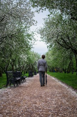 A young man in a gray suit with a black umbrella-cane on the track in the lush apple orchard