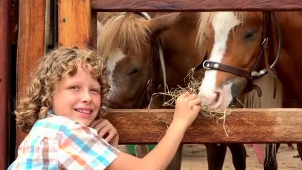 Junge füttert Bauernpferde