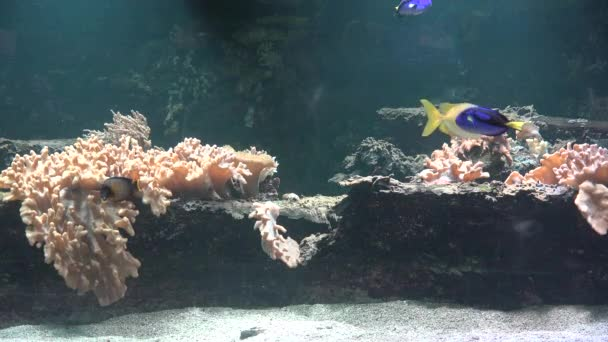 Fish And Coral In Aquarium