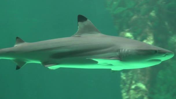 Cápa tengeri élet és a ragadozó állatok