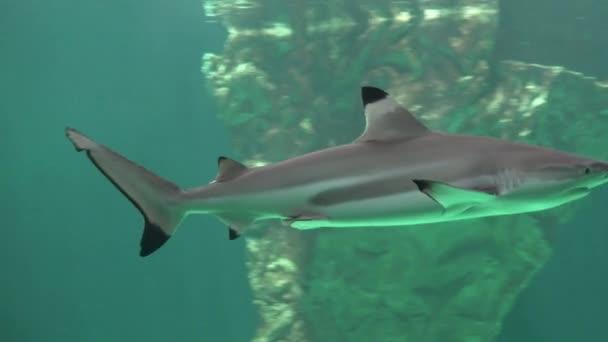 Cápák és a mély óceán ragadozói