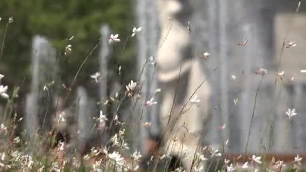 Bílé divoké květy a stonky