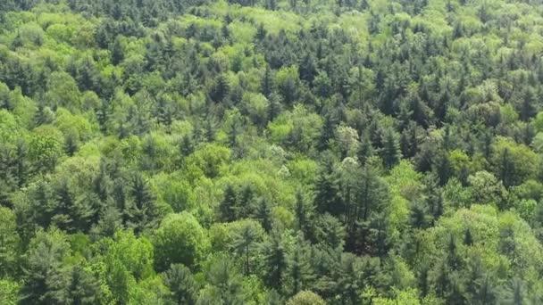 foreste, boschi, alberi, fogliame, natura, naturale