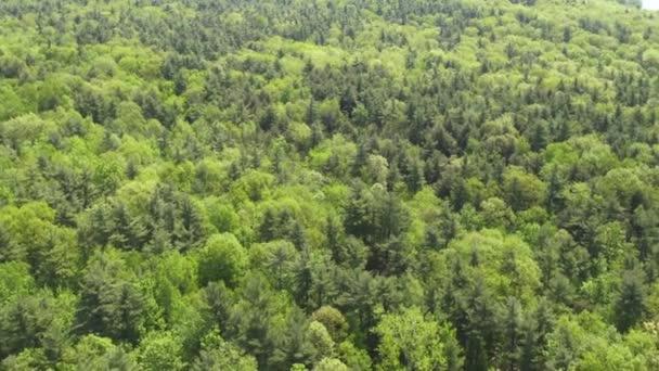 Les, lesy, stromy, listy, příroda, přírodní