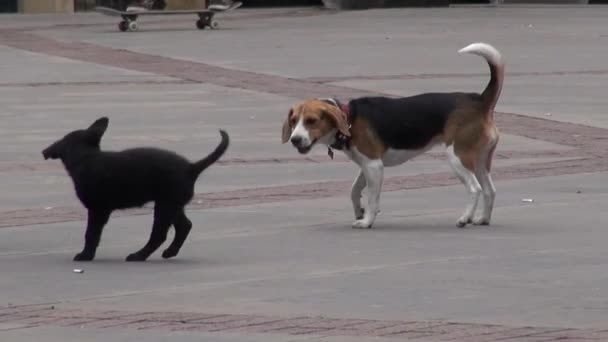 cuccioli, cani, canini, animali domestici, animali