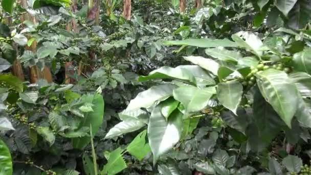 kávovníku, plantáže, farem, příroda