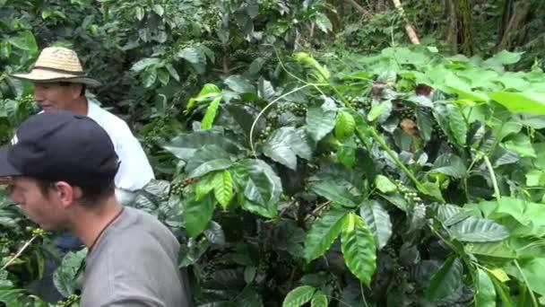 Kaffee-Bauern, Arbeiter, Plantage, Natur