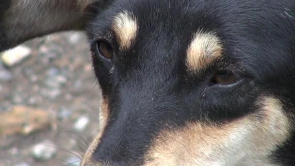 psi, psi, zvířata, zvířata