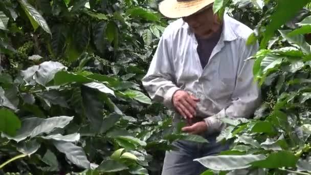 káva farmář, dělník, plantáže, příroda