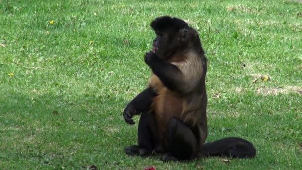 Opice, jíst, primáti, Zoo zvířata, přírodu, příroda