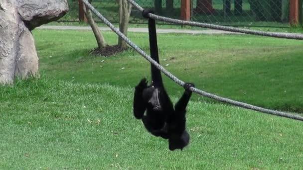 Opice, primáti, Zoo zvířata, přírodu, příroda