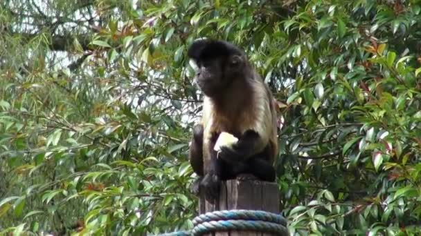 Monkeys Eating, Primates, Zoo Animals, Wildlife, Nature