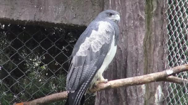 Eagles, Hawks, Birds of Prey, Animals, Wildlife, Nature