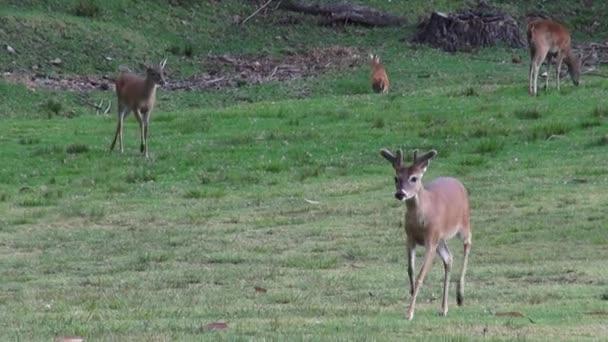 Deer, Elk, Moose, Mammals, Zoo Animals, Wildlife