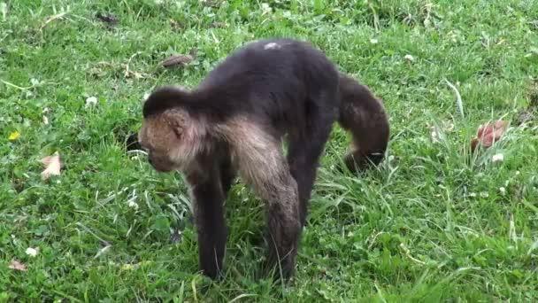 Majmok, főemlősök, állatkerti állatok, vadon élő állatok, természet