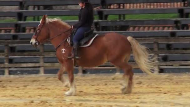 lovaglás, lovak, állatok