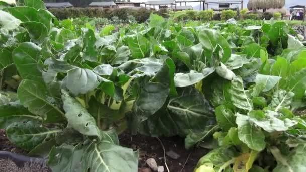 zeleniny, rostlin, listí, zeleň, příroda