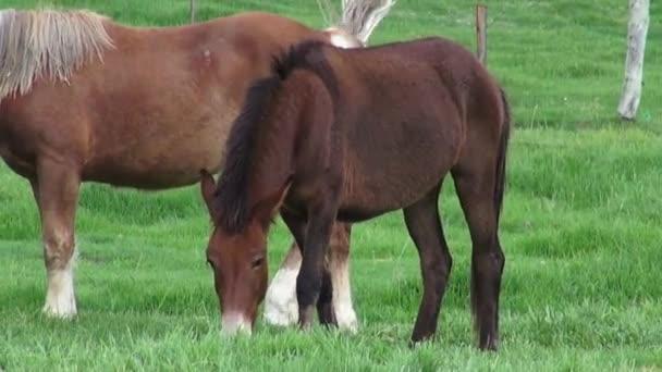 Pferde auf der Weide, Pferde, Nutztiere