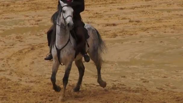 Horseback Riding, Horses, Animals