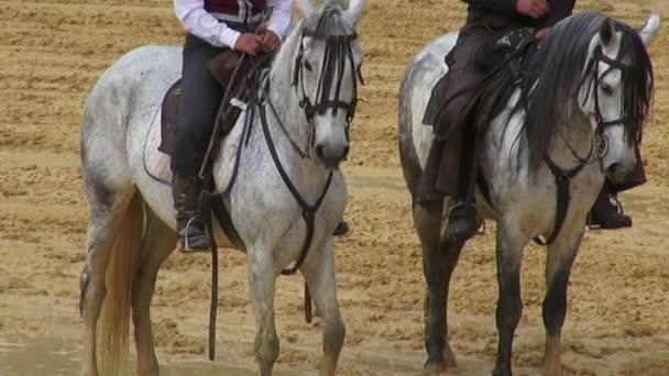 jízda na koni, koně, zvířata
