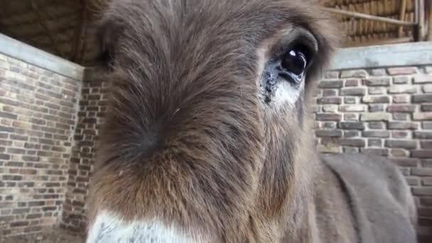 Donkey Head, Mules, Farm Animals