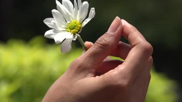 Květiny, kvetoucí rostliny, příroda