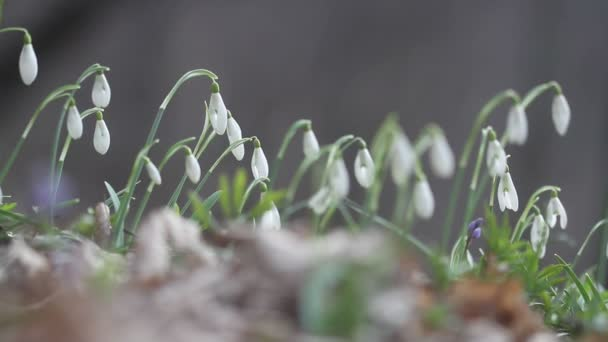 Blooming spring flowers in nature