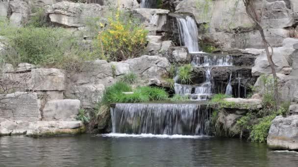 květy rostou před vodopád