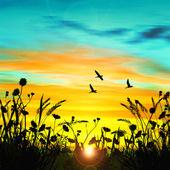 Fotografie krásná krajina s ptáky