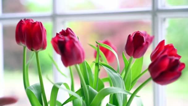 Uzavřete jasně osvětlenou scénu uspořádaných červených tulipánů.