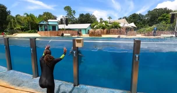 Orlando, Florida. 25. srpna2021. Delfín pozdrav divákům v mořském světě (15)