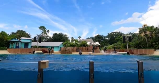 Orlando, Florida. 25. srpna2021. Dolphin jumping na mořském světě (10)