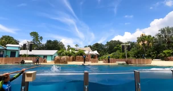 Orlando, Florida. 25. srpna2021. Dolphin jumping na mořském světě (12)