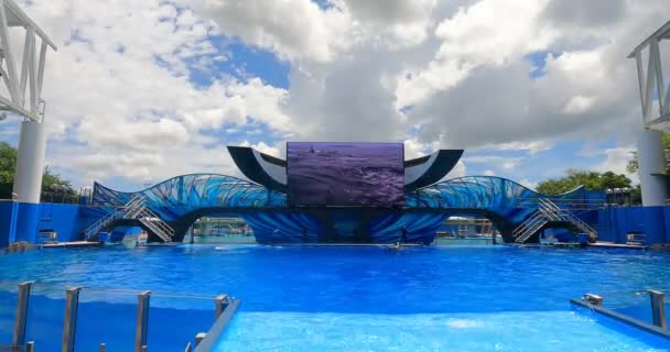Orlando, Florida. 25. srpna2021. Skoky na velrybu v Orca Encounter u Mořského světa (20)