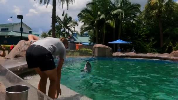 Orlando, Florida. 30. srpna2021. Trénink delfínů ve školce delfínů na mořském světě (17)