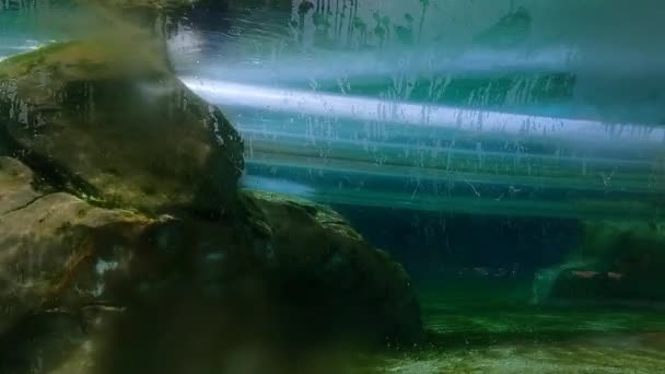 Orlando, Florida. 31. srpna2021. Osoba klesající trubice v delfíní ponoru v Aquatica (18)
