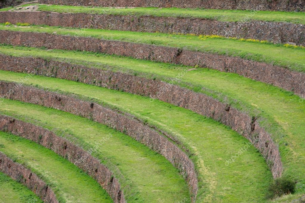 Terraced Fields In The Inca Archeological Area Of Pisac