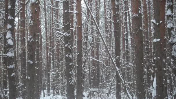 Zimní les a padající sníh.