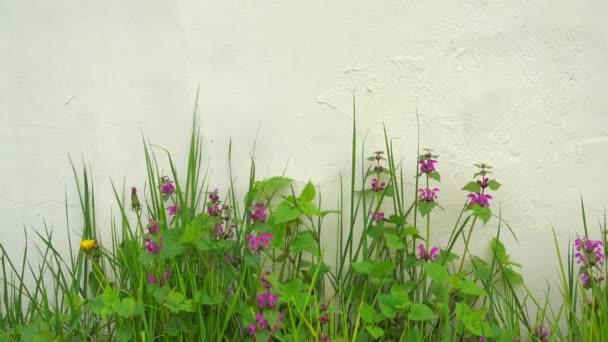 Krásné květiny a zelená tráva houpat na větru v blízkosti bílé zdi.